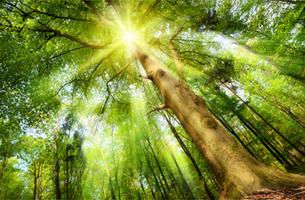 Ökologie Holzbearbeitung